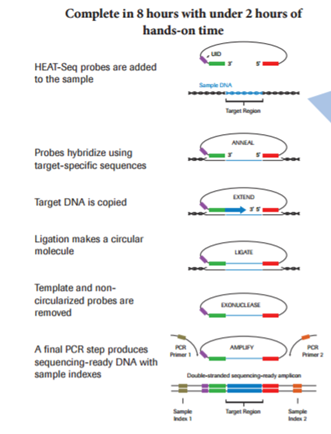 Pcr Based Target Enrichment For Ngs