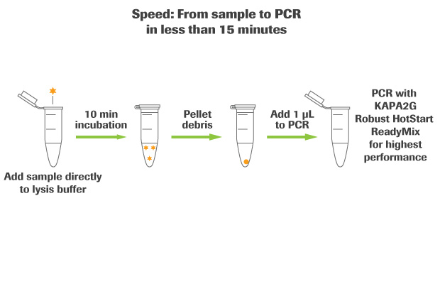Kapa Express Extract Kits For Pcr Roche Sequencing Solutions